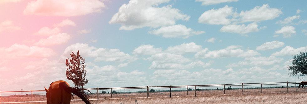 Abilene, TX 20 x 30 print