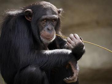 No alimentes con plátanos tu mente de mono.