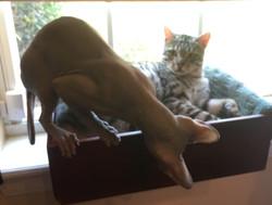 Stella and Meeko