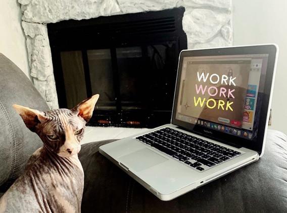 Goose working hard during quartaine