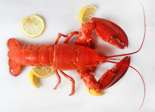 Steaming Lobster