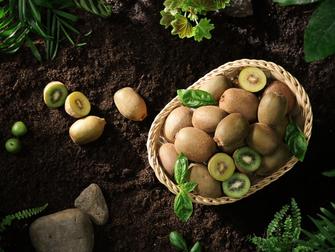 【黃綠奇異果,你愛吃哪款?】