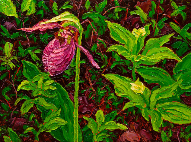 Moccasin Flower (oil, 12x16 in)