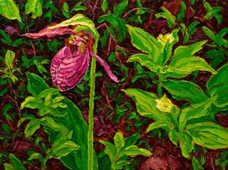 Moccasin Flower (oil, 12x16 in)