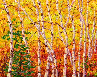 Autumn Birches (oil, 11x14 in, Sold)