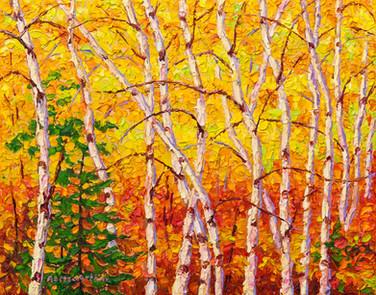 Autumn Birches (oil, 11x14 in, Sold)