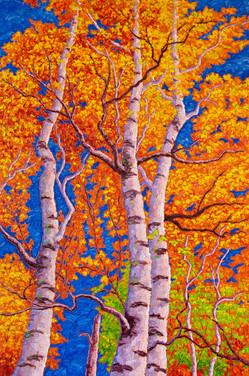 Fall Birches (oil, 24x36 in, Sold)