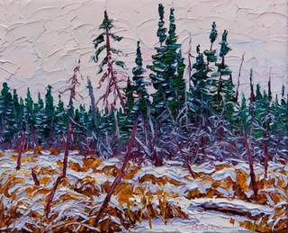 Beaver Marsh in Winter (oil, 8x10 in)
