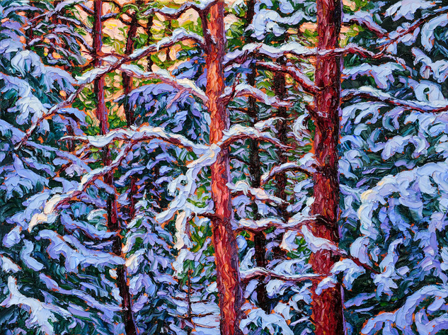 Jack Pines in Winter (oil, 12x16 in, Sold)