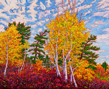Birches and White Pines (oil, 24x30 in, Sold)