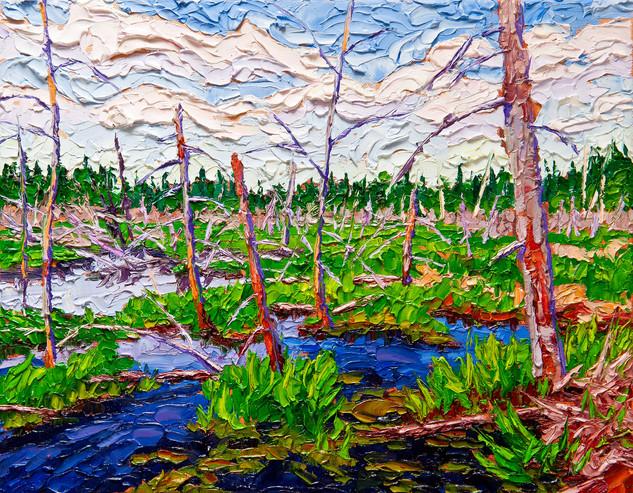 Beaver Swamp (oil, 11x14 in)