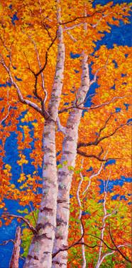 Autumn Birches II (oil, 18x36 in, Sold)