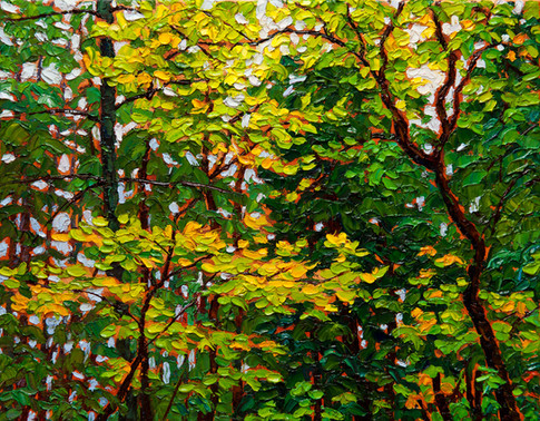 Forest Canopy (oil, 11x14 in, Sold)