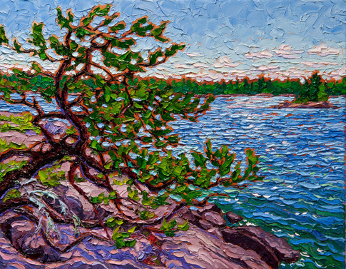 Leaning Pine (oil, 11x14 in, available)