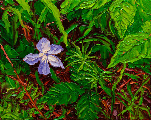 Woolly Blue Violet (oil, 8x10 in, sold)