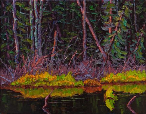 Morning Stillness on the Beaver Pond (oil, 11x14 in)