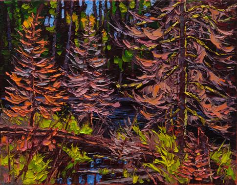 Backlit Spruce on Beaver Pond (oil, 11x14 in, Sold)