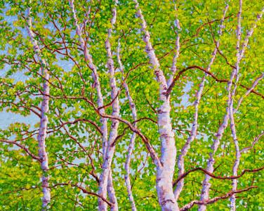 Spring Birches (oil, 24x30 in)
