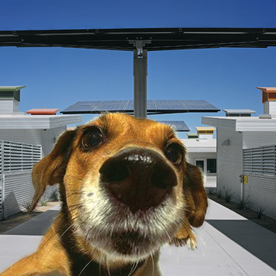 animal shelter b.jpg