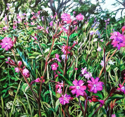 Red Campion in the Downs