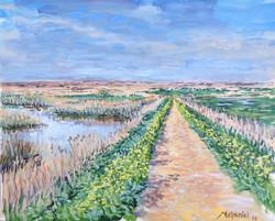 Attenborough's Walk