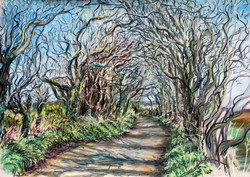 Road to Boswarthen, in spring