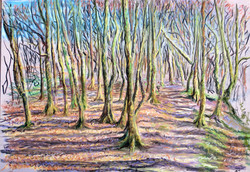 Trevelyn's ancient woods