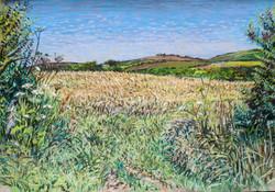 Field in mid-summer