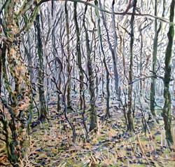 Woodland in Fog