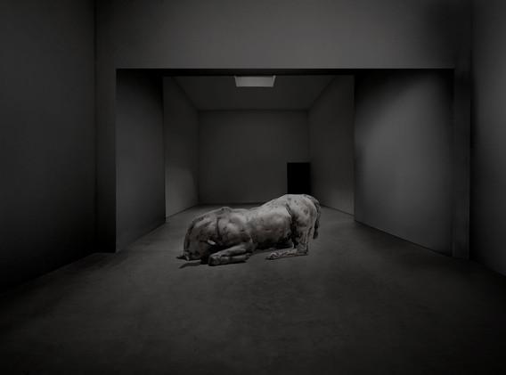 caballo si oscuro.jpg