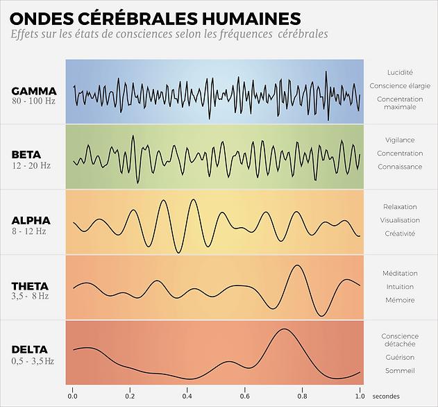 Ondes_cerebrales.png