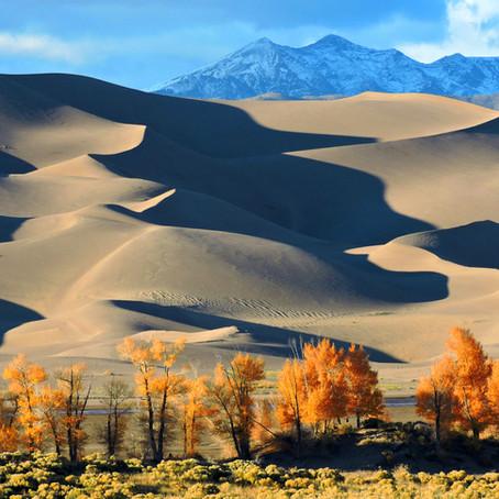 Autumn Among the Dunes
