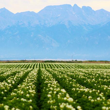 Colorado Grown and Raised