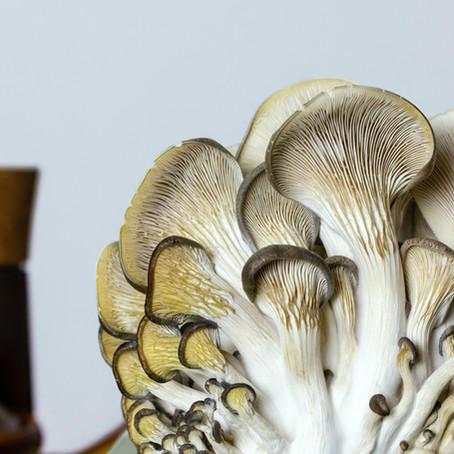 Mushroom Foraging in Colorado
