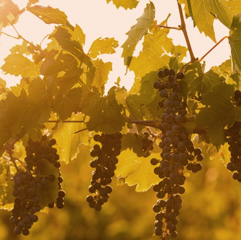 Six Colorado Wines to Enjoy this Spring