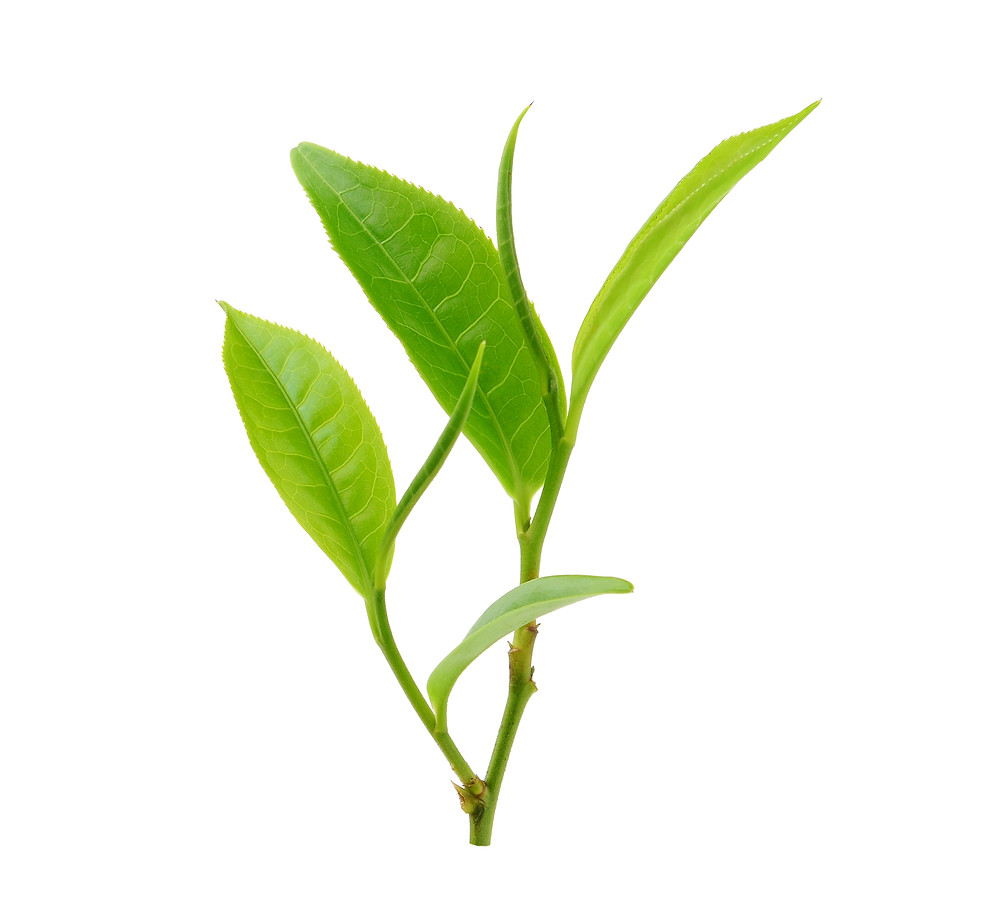 3 Questions You Probably Ask About Tea