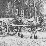 149 - G. McDonald at Kirkton, Pre 1914