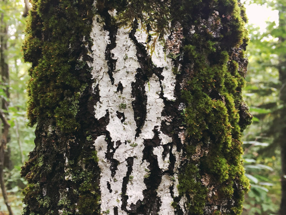 A Month in the Woods: Reaching Out