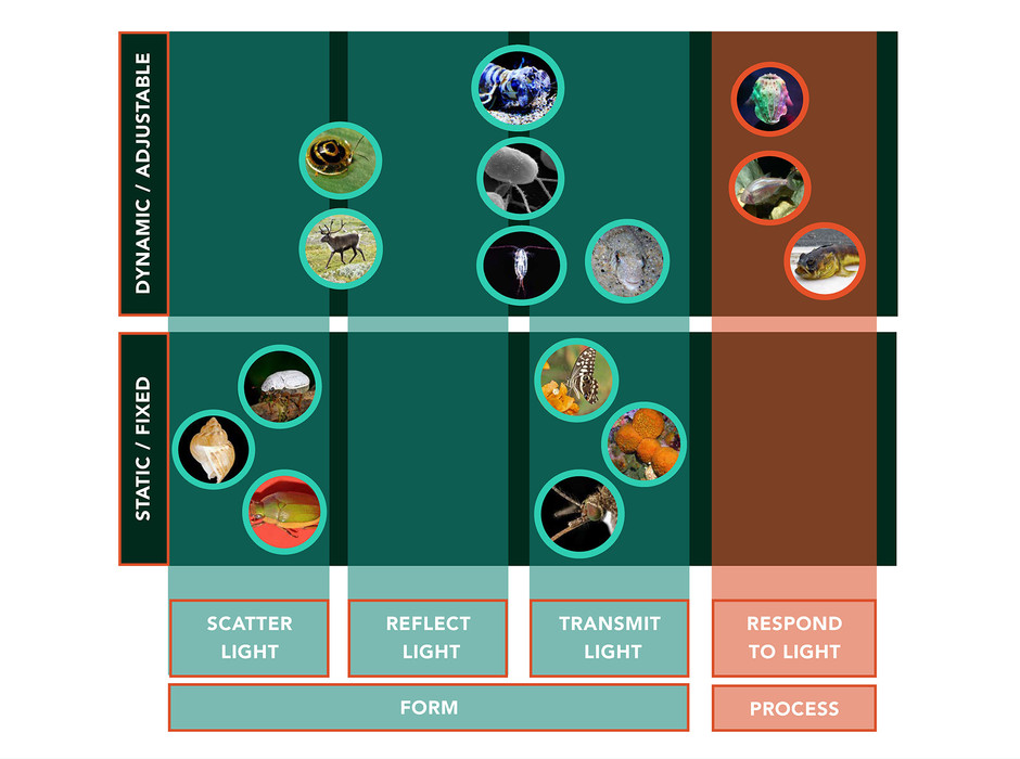 taxonomy (web).jpg
