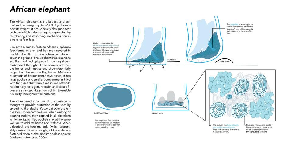 Elephant (web).jpg