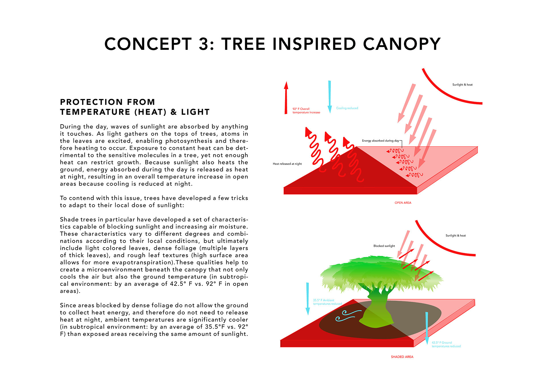 canopy (web).jpg