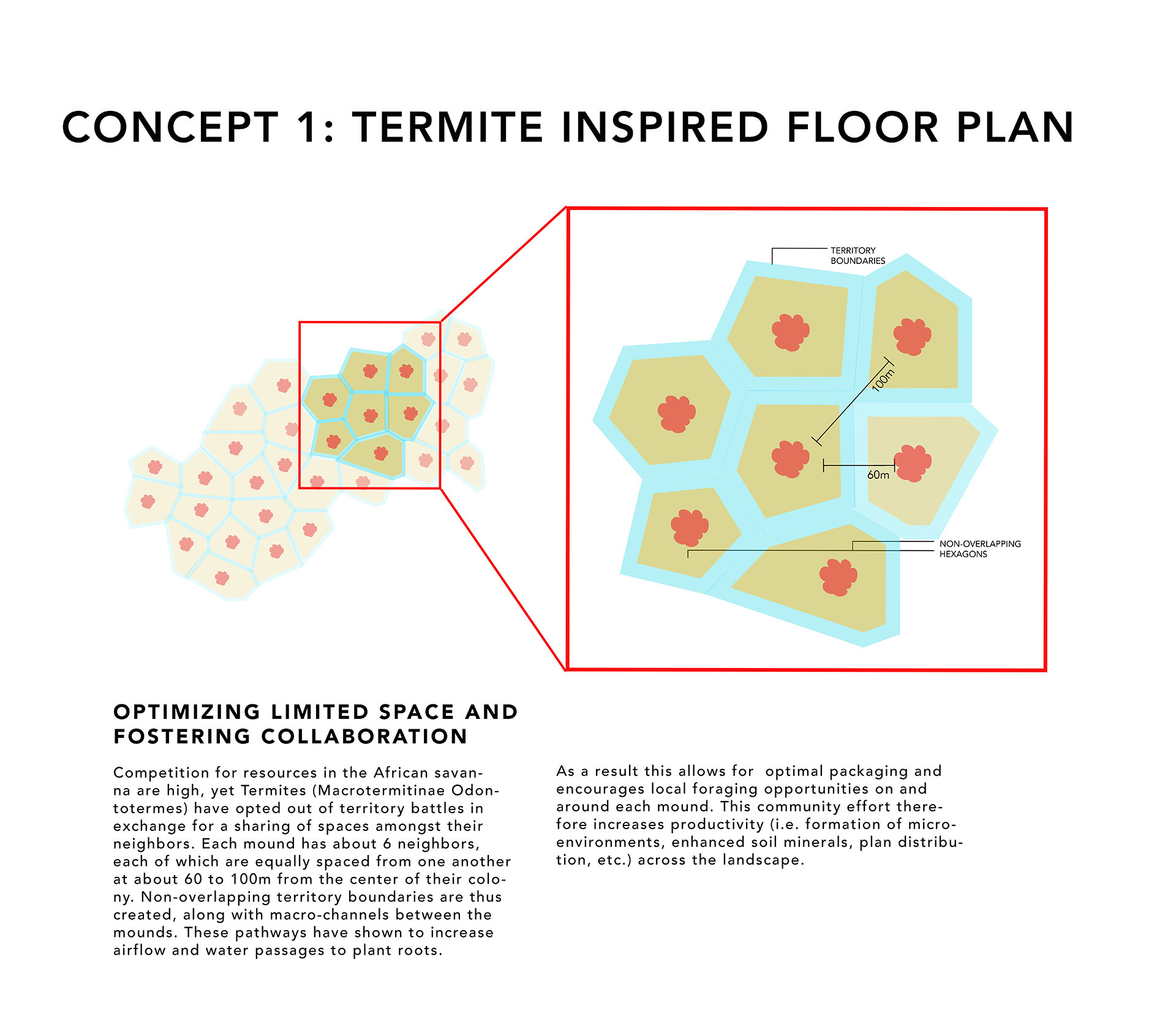 termite (web).jpg