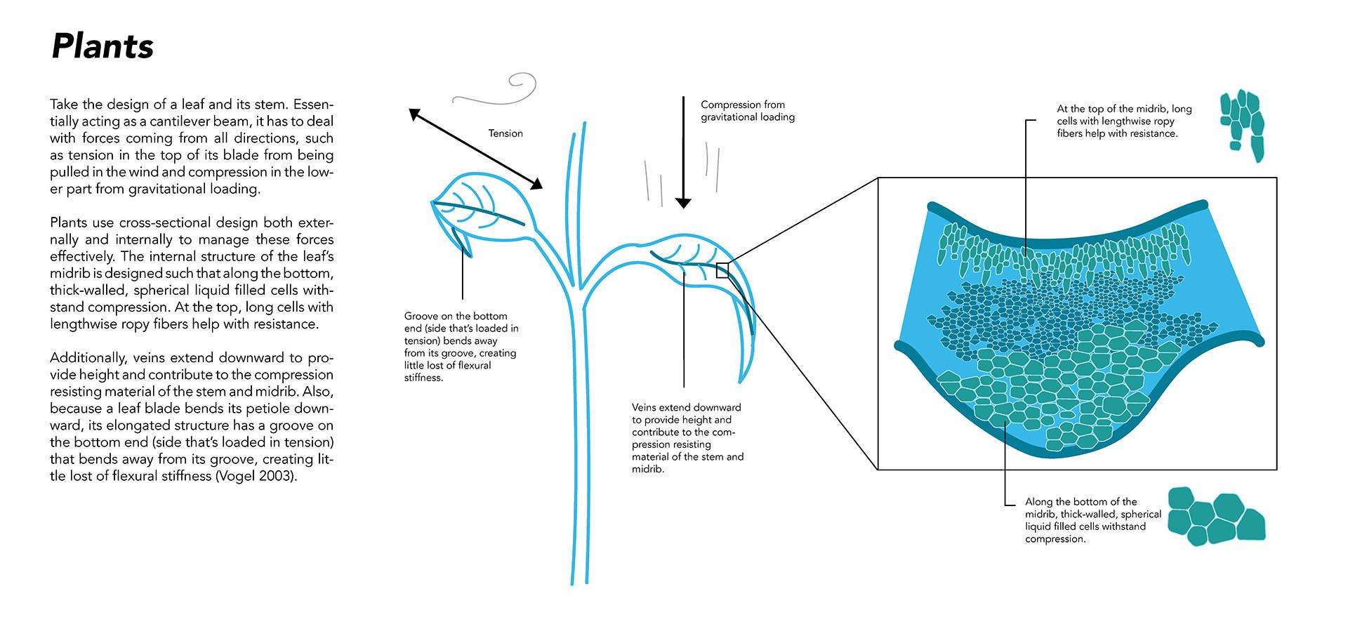 Plants (web).jpg