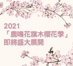 鹿鳴花旗木櫻花季