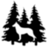 White Shepherd puppies, white  shepherds for sale, white german shepherd puppies, white german shepherds for sale, washington