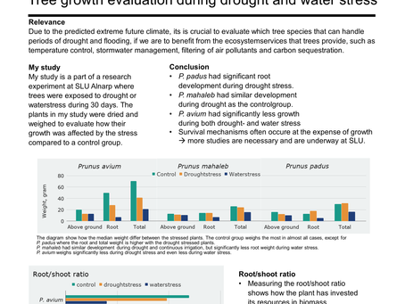 Who can handle the future? Tree growth evaluation during drought and water stress