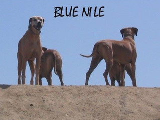 Blue Nile has a website!!!