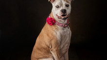 """""""Happy Tails"""" - Asia May"""