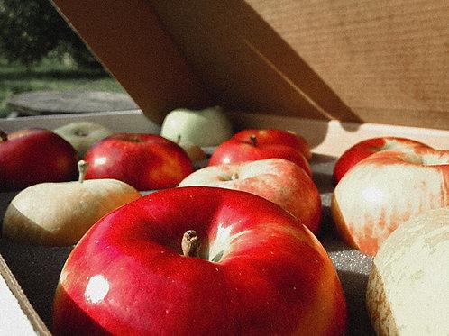 Variety Pack! Cosmic Crisp®, Opal®, Autumn Glory® & Honeycrisp®