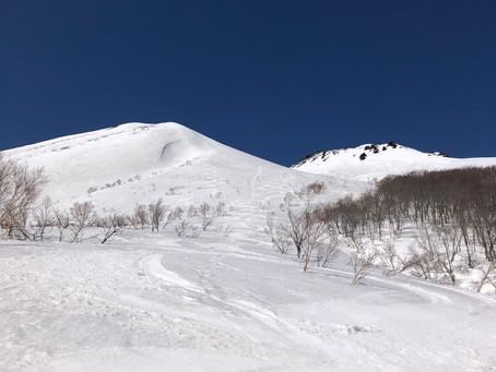 コロナとザラメ雪!
